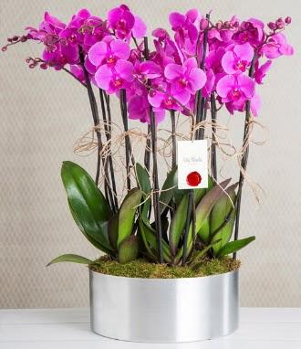 11 dallı mor orkide metal vazoda Ankara Dikmen Osmantemiz online çiçek gönderme sipariş