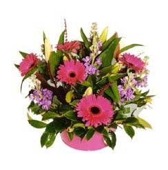 sepet içerisinde mevsim çiçeklerinden aranjman çiçekçi ankara Dikmen çiçek satışı