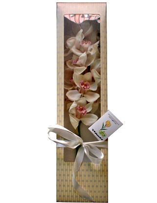 ankara çiçek yolla Dikmen malazgirt çiçekçi telefonları  ÖZEL SEVENLERE 1 DAL ORKIDE