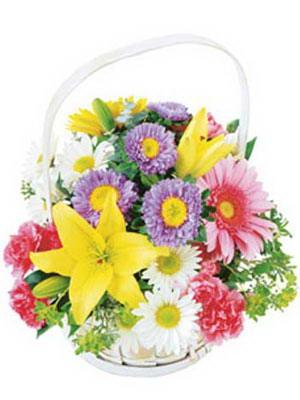 Ankara Dikmen öveçler çiçekçiler  Mevsim sepeti karisik mevsim çiçekleri