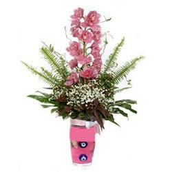 Dikmen Keklikpınarı çiçek online çiçek siparişi  cam yada mika vazo içerisinde tek dal orkide çiçegi