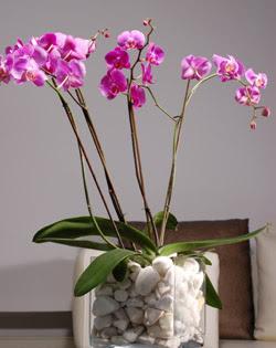 Dikmen ankara çiçek mağazası , çiçekçi adresleri  2 dal orkide cam yada mika vazo içerisinde