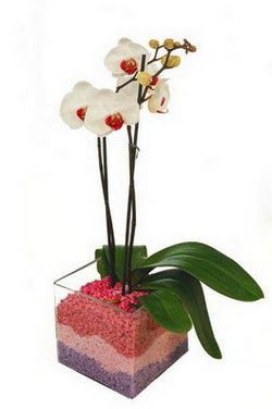 Ankara Dikmen çiçek yolla  tek dal cam yada mika vazo içerisinde orkide