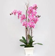 Dikmen İlkadım çiçek gönderme sitemiz güvenlidir  2 adet orkide - 2 dal orkide