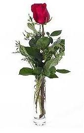 Vazo içerisinde 1 adet kirmizi gül Dikmen İlkadım çiçek gönderme sitemiz güvenlidir