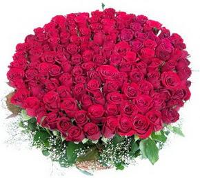 Ankara Dikmen öveçler çiçekçiler  100 adet kırmızı gülden görsel buket