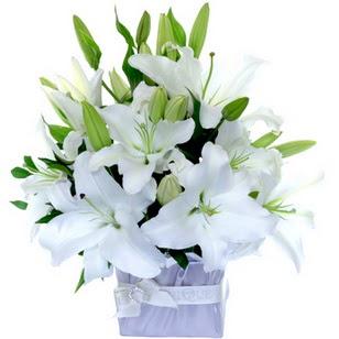 Dikmen cicek , cicekci  2 dal cazablanca vazo çiçeği