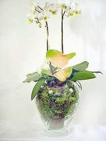 Ankara Dikmen 14 şubat sevgililer günü çiçek  Cam yada mika vazoda özel orkideler