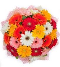15 adet renkli gerbera buketi Dikmen sokullu ankara internetten çiçek satışı