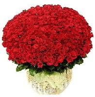 501 adet kırmızı gül aranjmanı Ankara Dikmen İlker çiçek yolla , çiçek gönder , çiçekçi