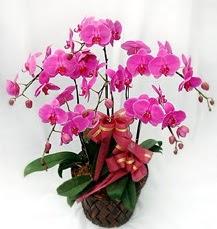 6 Dallı mor orkide çiçeği ankara çiçek yolla Dikmen malazgirt çiçekçi telefonları
