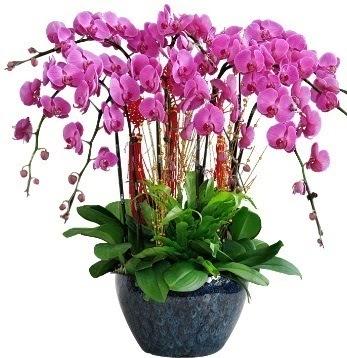 9 dallı mor orkide Dikmen ankara çiçek siparişi çiçek gönderme