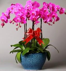7 dallı mor orkide Dikmen Metin Akkuş çiçek satışı , çiçekçi , çiçekçilik