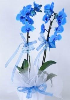 2 dallı mavi orkide Ankara Dikmen kaliteli taze ve ucuz çiçekler