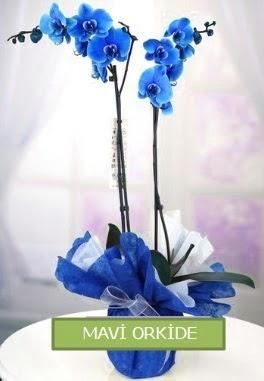 2 dallı mavi orkide Yukarı Dikmen ankara çiçekleri güvenli kaliteli hızlı çiçek