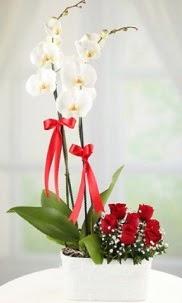 2 dallı beyaz orkide ve 7 kırmızı gül Dikmen Keklikpınarı çiçek online çiçek siparişi