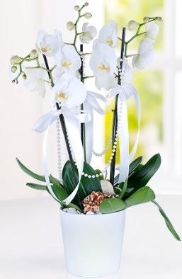 3 dallı beyaz orkide Dikmen cicek , cicekci