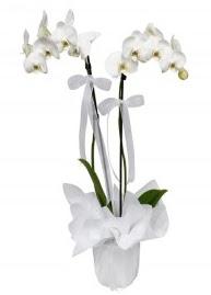 2 dallı beyaz orkide Ankara Dikmen çiçek siparişi sitesi