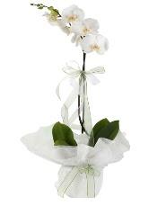 1 dal beyaz orkide çiçeği Ankara çiçek satışı Dikmen online çiçekçi , çiçek siparişi