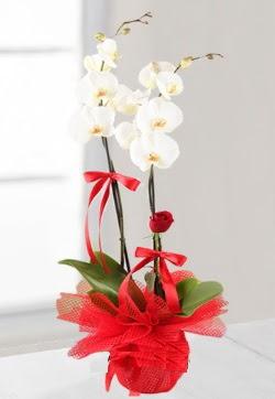 2 dallı beyaz orkide ve 1 adet kırmızı gül ankara çiçek yolla Dikmen malazgirt çiçekçi telefonları