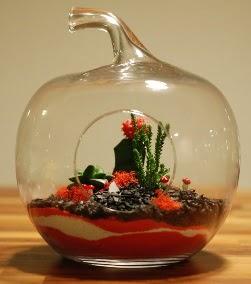 Elma Terrarium 3 kaktüs orta boy Dikmen ankara çiçek siparişi çiçek gönderme