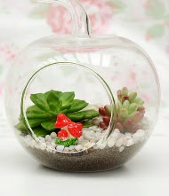 Küçük elma terrarium 3 kaktüs Ankara Dikmen İlker çiçek yolla , çiçek gönder , çiçekçi
