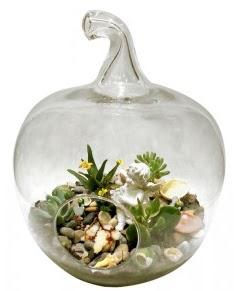 Orta boy elma terrarium 5 kaktüs Dikmen Harbiye ankara İnternetten çiçek siparişi