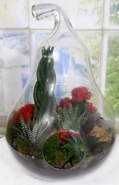 5 adet kaktüs orta boy armut terrarium Dikmen ankara çiçek mağazası , çiçekçi adresleri