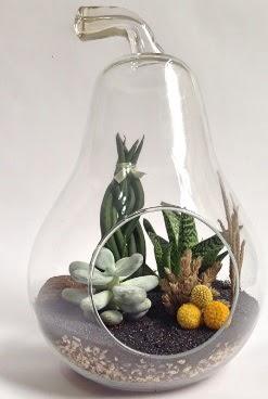 Orta boy armut 5 kaktüs terrarium Dikmen Akpınar Ankara  hediye sevgilime hediye çiçek