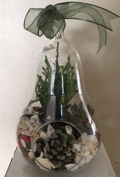Orta boy armut terrarium 3 kaktüs Ankara Dikmen çiçek siparişi sitesi