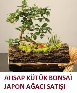 Ahşap kütük içerisinde bonsai ve 3 kaktüs çiçekçi Dikmen çiçek servisi , çiçekçi adresleri