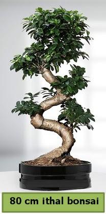 80 cm özel saksıda bonsai bitkisi Dikmen Ankara çiçek gönder uluslararası çiçek gönderme