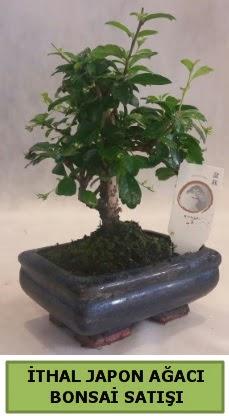 İthal japon ağacı bonsai bitkisi satışı Dikmen Ankara çiçek gönder uluslararası çiçek gönderme