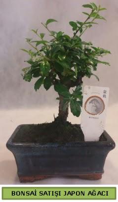 Minyatür bonsai ağacı satışı Ankara Dikmen cicekciler , cicek siparisi