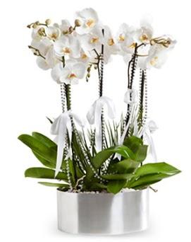 Beş dallı metal saksıda beyaz orkide Dikmen cicek , cicekci