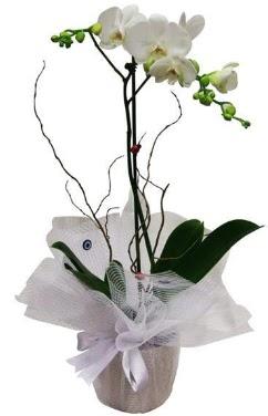 Tek dallı beyaz orkide Dikmen Harbiye ankara İnternetten çiçek siparişi