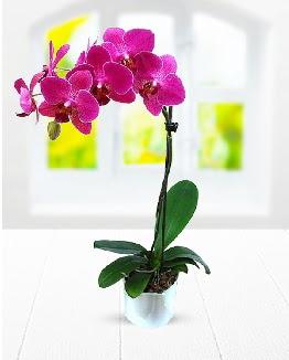 Tek dallı mor orkide Ankara Dikmen 14 şubat sevgililer günü çiçek