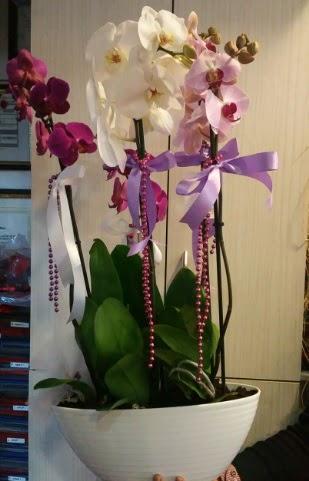 Mor ve beyaz ve pembe 6 dallı orkide Dikmen Akpınar Ankara  hediye sevgilime hediye çiçek