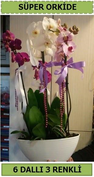 6 dallı 3 renk özel vazoda orkide çiçeği Ankara Dikmen 14 şubat sevgililer günü çiçek
