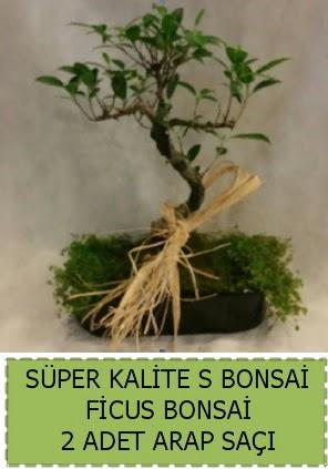 Ficus S Bonsai ve arap saçı Dikmen Ankara çiçek gönder uluslararası çiçek gönderme