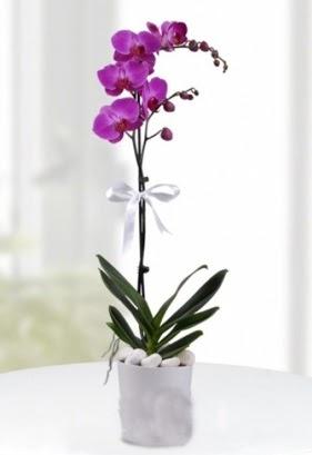 Tek dallı saksıda mor orkide çiçeği Yukarı Dikmen ankara çiçekleri güvenli kaliteli hızlı çiçek