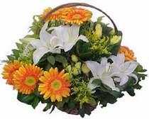 Ankara Dikmen öveçler çiçekçiler  sepet modeli Gerbera kazablanka sepet